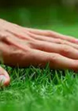 Step into Spring with a Beautiful Lawn